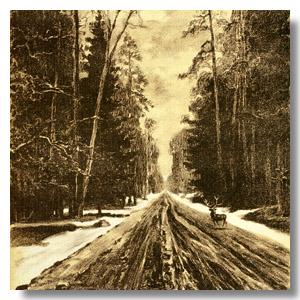 Беловежская пуща старая дорога