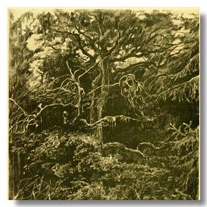 Беловежская пуща дерево